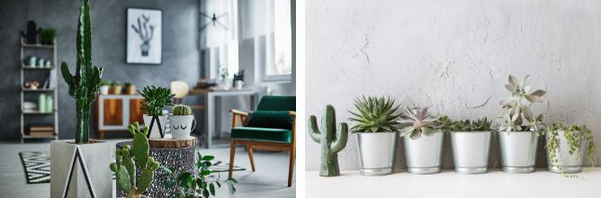 Cactussen-en-vetplanten-tuincentrum-de-schouw-Houten
