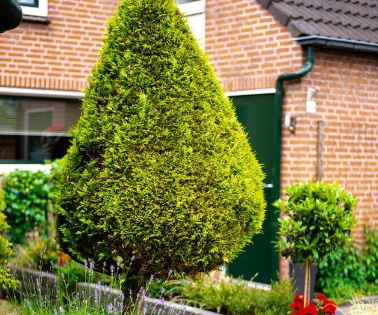 Tuincentrum De Schouw | Tuinplanten