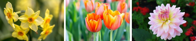 Bloembollen en zaden | Tuincentrum De Schouw