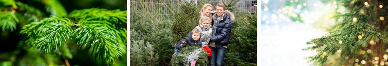 Kerstbomen kopen bij Tuincentrum De Schouw in Houten