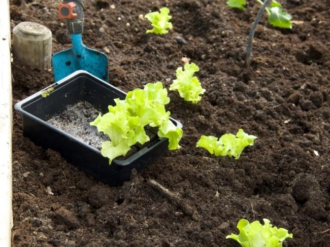 Ontdek verschillende soorten meststoffen bij ons tuincentrum in Houten