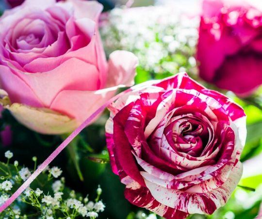 Tuincentrum De Schouw | Bloemen | Bloemen bestellen