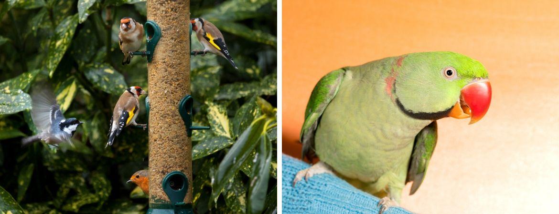 Tuinvogels | Siervogels | Tuincentrum De Schouw | Houten | Utrecht