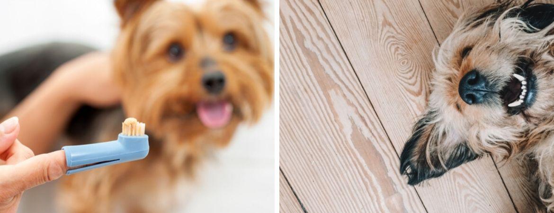Honden | Dierenwinkel | Tuincentrum De Schouw | Houten