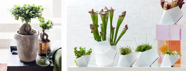 Kamerplanten kopen bij Tuincentrum De Schouw in Houten